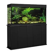 petco fish tanks with stands. Simple Petco Throughout Petco Fish Tanks With Stands
