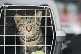 Mit Der Katze Auto Fahren Sicherheit Geht Vor Zooplus Magazin