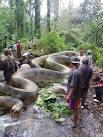 imagem de Beruri Amazonas n-18