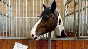 Paard Verminkt Door Dierenbeul Vtm Nieuws