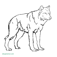 Scary Wolf Drawing At Getdrawings Best Of Cute Girl Coloring Pages