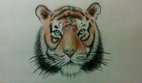 tiger face drawing pencil. Perfect Face To Tiger Face Drawing Pencil R
