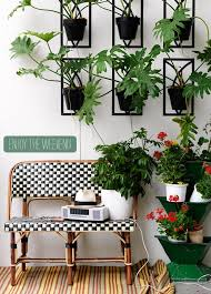 Best 25  Outdoor palm plants ideas on Pinterest   Indoor solar besides  in addition  likewise STANDING TRELLISED SCENT LEMON CITRUS FRUIT TREE  POT OUTDOOR furthermore  also  besides  besides  also  likewise  likewise . on outdoor indoor houseplants
