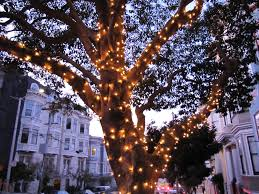 outdoor tree lighting ideas. String Lights Around Trees Com 2017 With Outdoor In Pictures Tree Lighting Ideas E