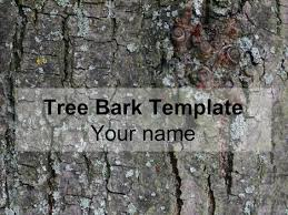 Tree Powerpoint Template Tree Bark Powerpoint Template