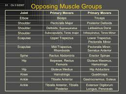 Opposing Muscles Group Chart Physical Therapy School Ace