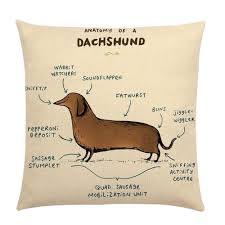 details about dachshund gifts cushion cover pug anatomy of a pug dachshund sausage dog gift