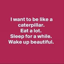 Beauty Funny Quotes Best Of Afternoon Funny Picture Dump 24 Pics Funny Quotes Pinterest