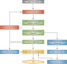 Pathophysiology Of Osteoarthritis In Flow Chart 72 Conclusive Pathophysiology Of Arthritis In Flow Chart