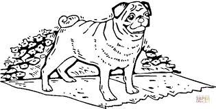 Small Picture Pug Coloring Page Photo Image Pug Coloring Pages at Children Books