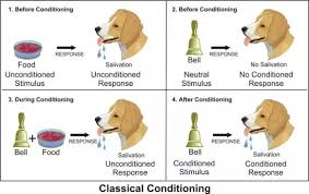 Classical Conditioning In The Classroom What Are Examples Of Classical Conditioning In The Classroom