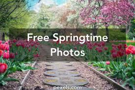 Free Spring 50 Interesting Springtime Photos Pexels Free Stock Photos