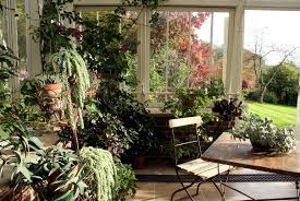 Small Picture Caring for plants in the conservatory and 17 design ideas