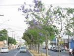 imagem de Aparecida de Goiânia Goiás n-5