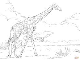 Reticulated Giraffe Coloring Page Free Printable