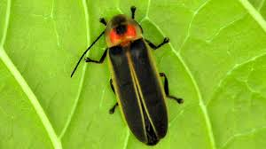 Small Insects Attracted To Light Why Are Bugs Attracted To Light