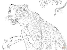 Cute Leopard Coloring Page Free Printable Pages Coloring Pages