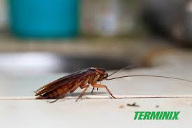 5 best ways to get rid of roaches