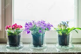 Schöne Dekoration Mit Gras Blumen Töpfe Auf Der Fensterbank