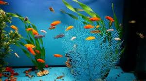 Aquarium Backgrounds Aquarium Background Blue Calm Fish Swim Grass Saver Video Stock