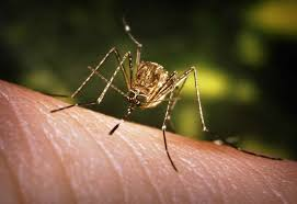 PHOTOS: Tips For Avoiding Mosquito BitesRecent Rains And High Summer  Temperatures The Houston Area Has