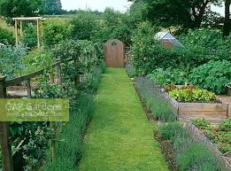 lavandula edged grass path to wooden garden gate in vegetable garden raised beds planted with