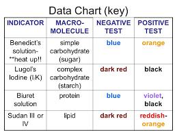 Iodine Color Chart Identifying Macromolecules In Food Lab Eva Becker Hamilton