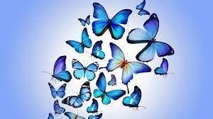 1366 X 768 Butterfly Wallpapers - Top ...