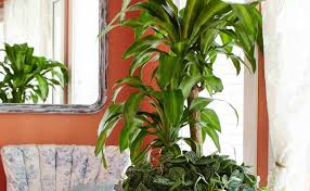 lighting : Fascinating Tall Indoor Plant 114 Tall House Plants ...