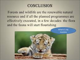 wild life conservation science