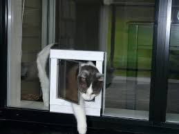 dog door in glass pet installation sydney