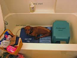 dog incontinence bed. Contemporary Incontinence HandicappedPetsNet Intended Dog Incontinence Bed D