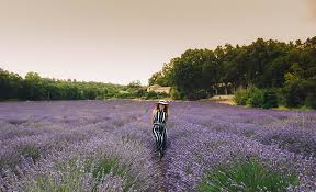 Visiting <b>lavender fields</b> in the Provence | Along Came An Elephant