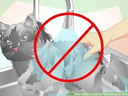 image titled make an herbal flea remedy for cats step 8