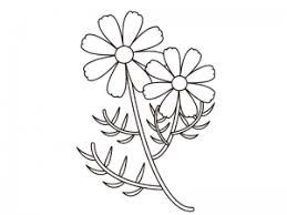 コスモス秋桜のぬりえ線画イラスト素材 イラスト無料