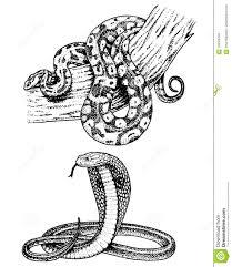 змейка гадюки кобра и питон змея Anaconda или гадюка королевские