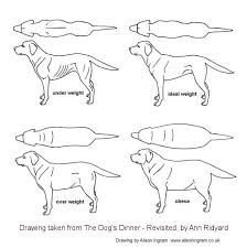 Raw Feeding Chart For Puppies The Dogs Dinner By Ann Ridyard Feeding Puppies