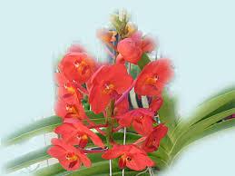 орхидеи скачать бесплатно орхидеи фото картинки