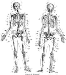 Pagan clipart skeletal system - Pencil and in color pagan clipart ...