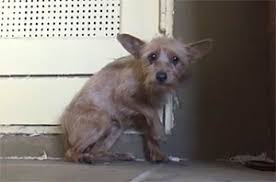Image result for abandoned dog