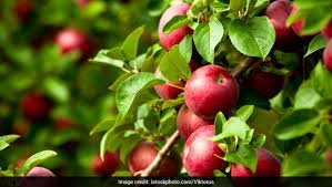 5 most por fruit bearing trees and