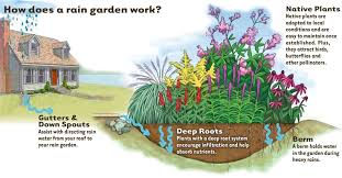 Small Picture Rain Garden Designs Nebraska H20