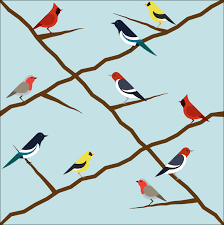 Bird Patterns