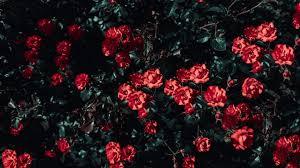 26 Aesthetic Flower Wallpapers ...