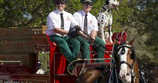 budweiser clydesdales return to the treasure coast in time for budweiser clydesdales return to the treasure coast in time for holidays