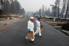 Image result for paradise camp fire recovery