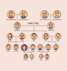 Family Pedigree Chart Vector Images 22