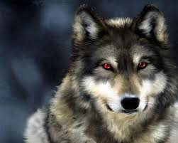 awesome dangerous wolf wallpaper full hd wallpapers