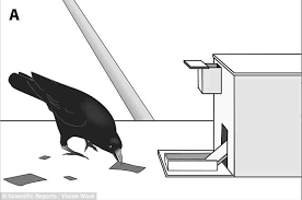 Crow Vending Machine Plans Best Crows Can Make Tools From Memory And Will Improve On Own Designs