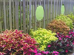 Small Picture Coleus Basics HGTV